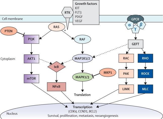 Map2k1 Pathway.Treatment Implications Of The Emerging Molecular Classification