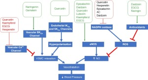 Flavonoids in hypertension: a brief review of the underlying