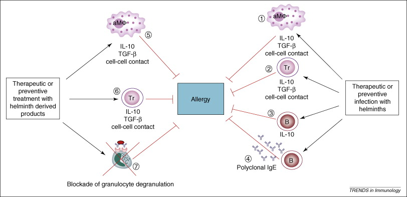 tratament alergic helmintic