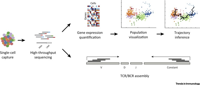 Single-Cell Genomics: Approaches and Utility in Immunology