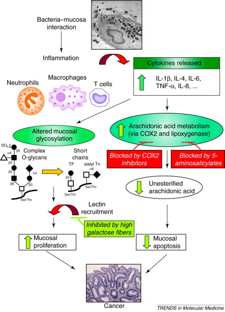 Inflammation And Colorectal Cancer Ibd Associated And Sporadic Cancer Compared Sciencedirect