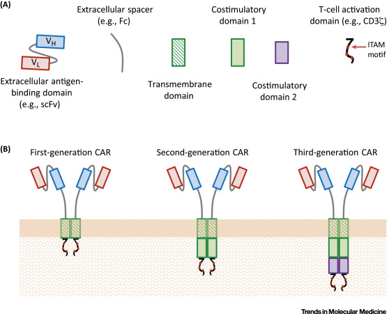 CARs: Synthetic Immunoreceptors for Cancer Therapy and