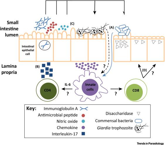giardia pathogenesis)