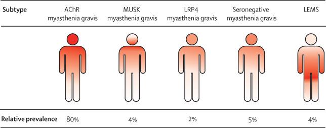 myasthenia gravis eye exercises