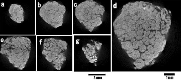 Ocean Manganese Nodules As Stromatolite With A Fractal Like