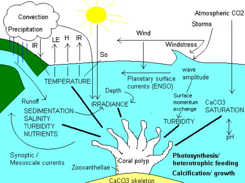 Climate change global warming and coral reefs modelling the schematic diagram summarizing key meteorological processes and coral requirements controlling calcification photosynthesis and survival ccuart Choice Image