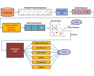 Enzyme classification using multiclass support vector