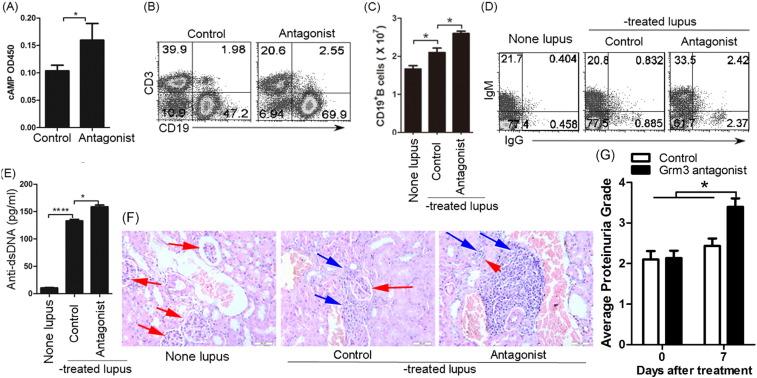 Ligation of metabotropic glutamate receptor 3 (Grm3