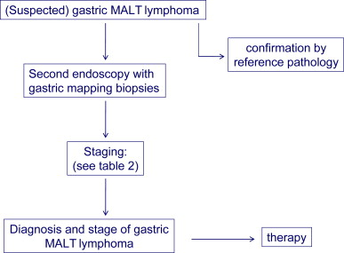 Gastric MALT lymphoma – Update on diagnosis and treatment