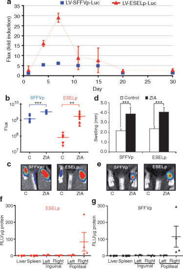 IL10 Released by a New Inflammation-regulated Lentiviral