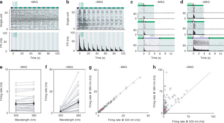 LiGluR Restores Visual Responses in Rodent Models of Inherited