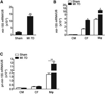 Macrophage Derived Mir 155 Containing Exosomes Suppress Fibroblast