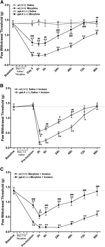 Preprotachykinin A Gene Disruption Attenuates Nociceptive