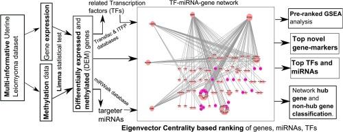 MiRNA-TF-gene network analysis through ranking of biomolecules for