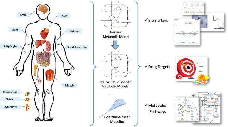 Biomedical Applications Of Cell And Tissue Specific Metabolic