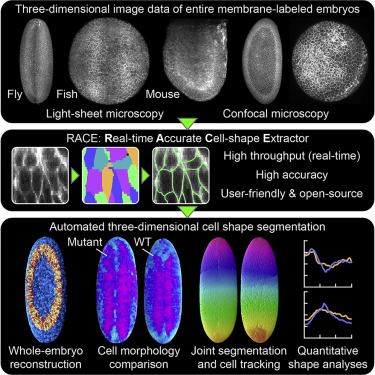 Real-Time Three-Dimensional Cell Segmentation in Large-Scale