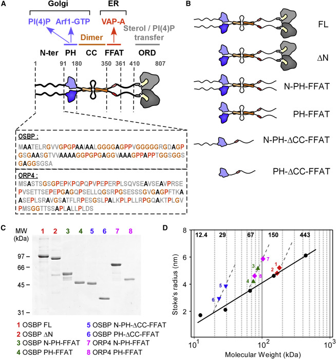 An Intrinsically Disordered Region in OSBP Acts as an