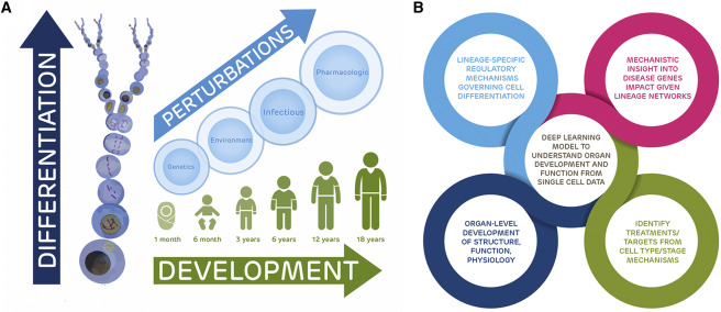 The Pediatric Cell Atlas: Defining the Growth Phase of Human