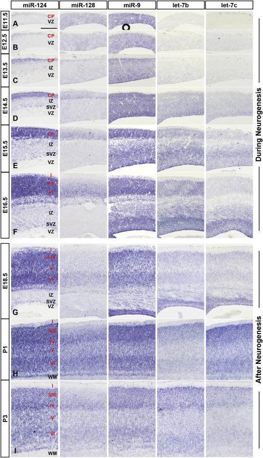 Dejtingsajt Ivy ligan gradienter