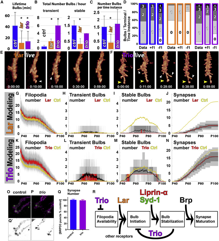 Serial Synapse Formation through Filopodial Competition for Synaptic