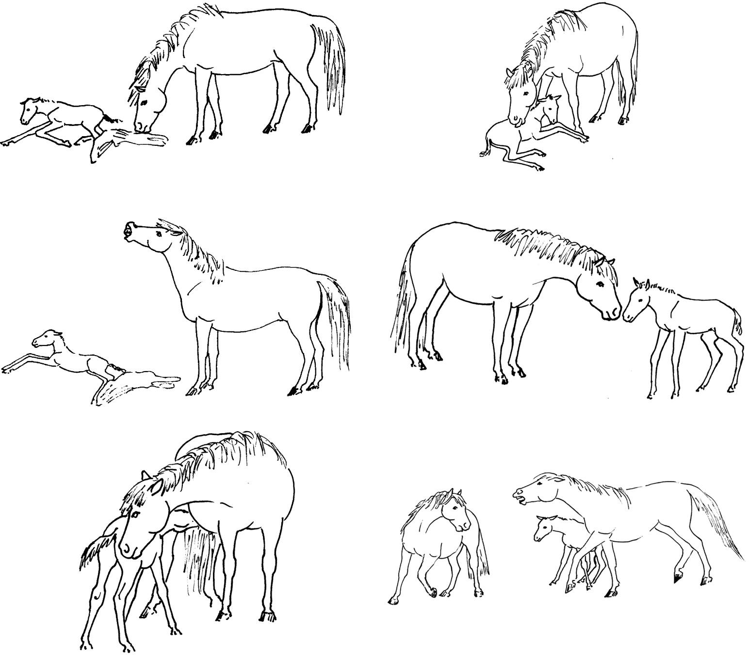 "Vet Supply Equine Horse Stomach Tube 3//8/"" OD Foal 7/' Long"