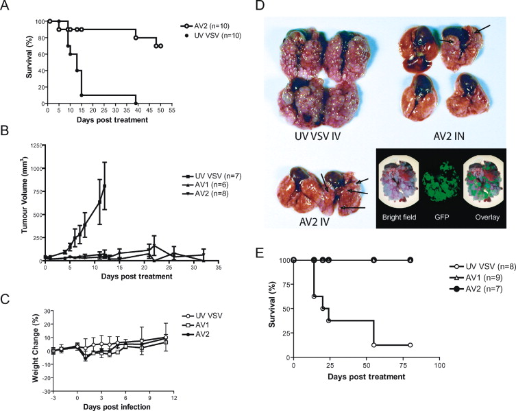 VSV strains with defects in their ability to shutdown innate
