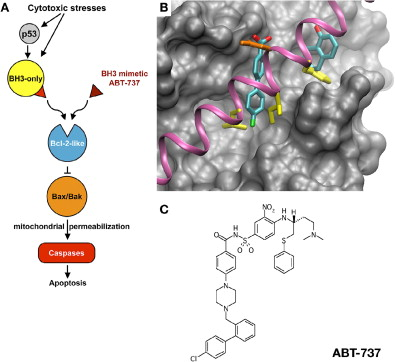 Killing cancer cells by flipping the Bcl-2/Bax switch