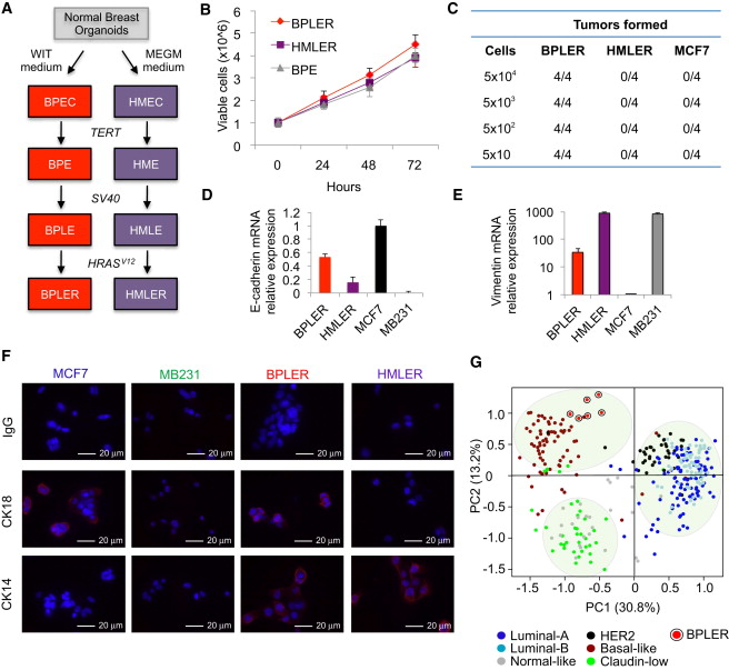 A Genome-wide siRNA Screen Identifies Proteasome Addiction as a