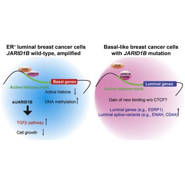 Al gene variant milk breast cancer
