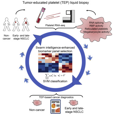 Swarm Intelligence-Enhanced Detection of Non-Small-Cell Lung Cancer Using  Tumor-Educated Platelets - ScienceDirect
