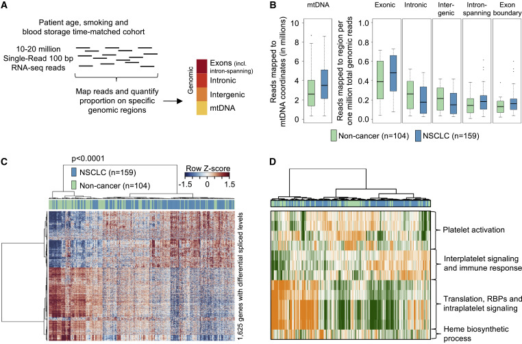Swarm Intelligence Enhanced Detection Of Non Small Cell Lung Cancer