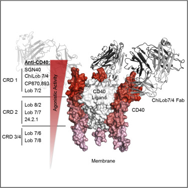 Complex Interplay between Epitope Specificity and Isotype