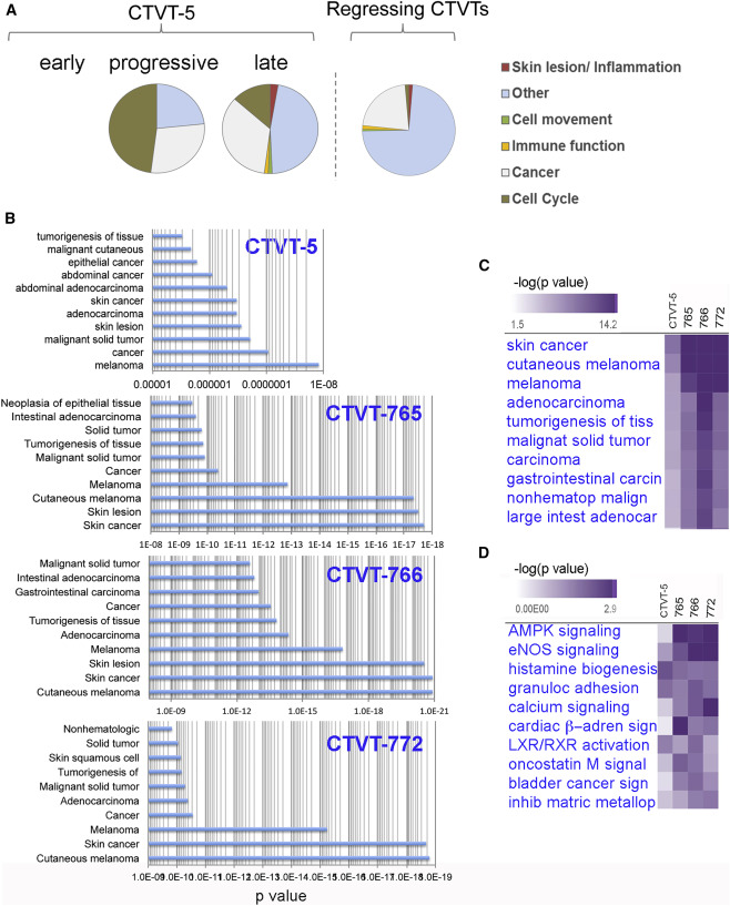 Molecular Signatures of Regression of the Canine Transmissible