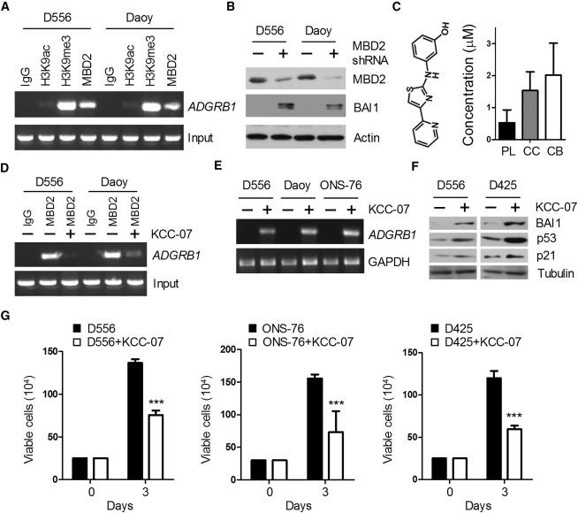 BAI1 Suppresses Medulloblastoma Formation by Protecting p53