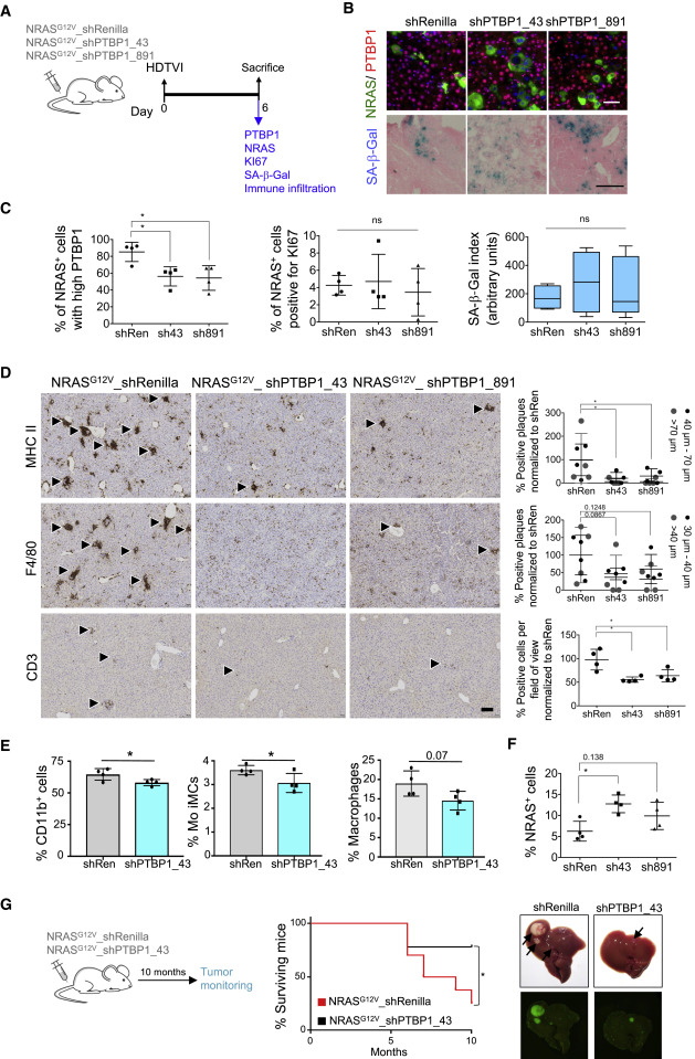 PTBP1-Mediated Alternative Splicing Regulates the Inflammatory