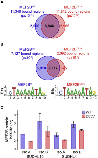 MEF2B Instructs Germinal Center Development and Acts as an Oncogene