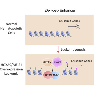 HOXA9 Reprograms the Enhancer Landscape to Promote