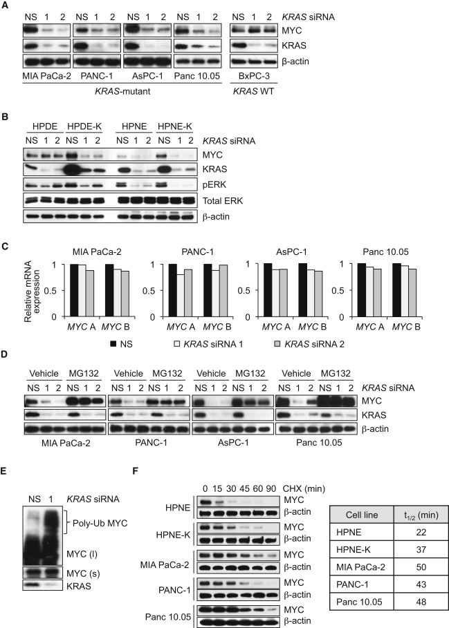 KRAS Suppression-Induced Degradation of MYC Is Antagonized by a MEK5