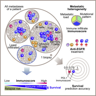 The Link Between The Multiverse Of Immune Microenvironments In Metastases And The Survival Of Colorectal Cancer Patients Sciencedirect