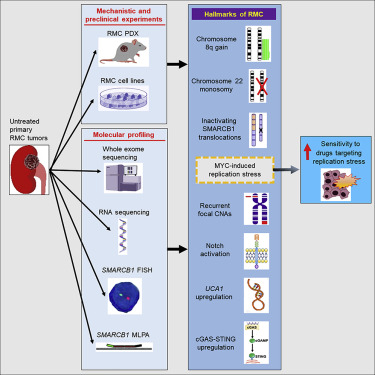 Comprehensive Molecular Characterization Identifies Distinct Genomic And Immune Hallmarks Of Renal Medullary Carcinoma Sciencedirect