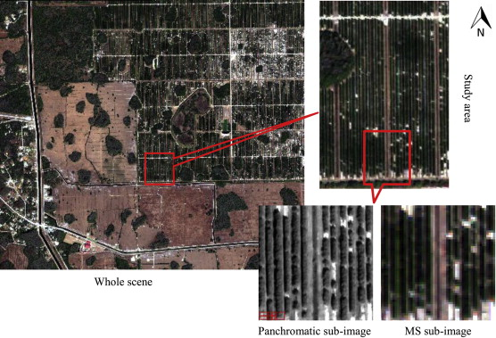 Feasibility Study On Huanglongbing Citrus Greening Detection - Worldview 2 satellite