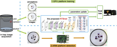 Automatic in-trap pest detection using deep learning for pheromone