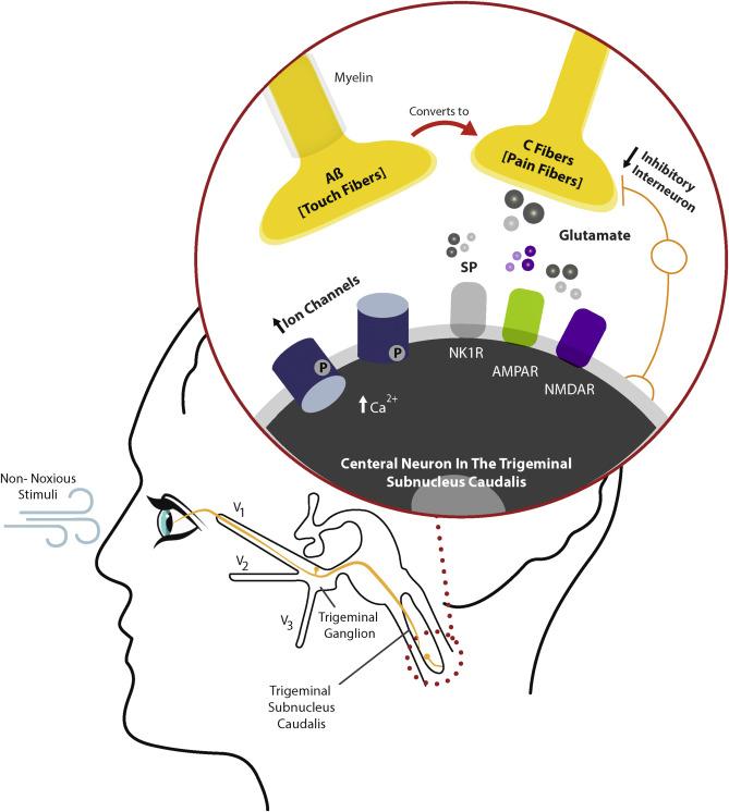 Neuropathic pain and dry eye - ScienceDirect
