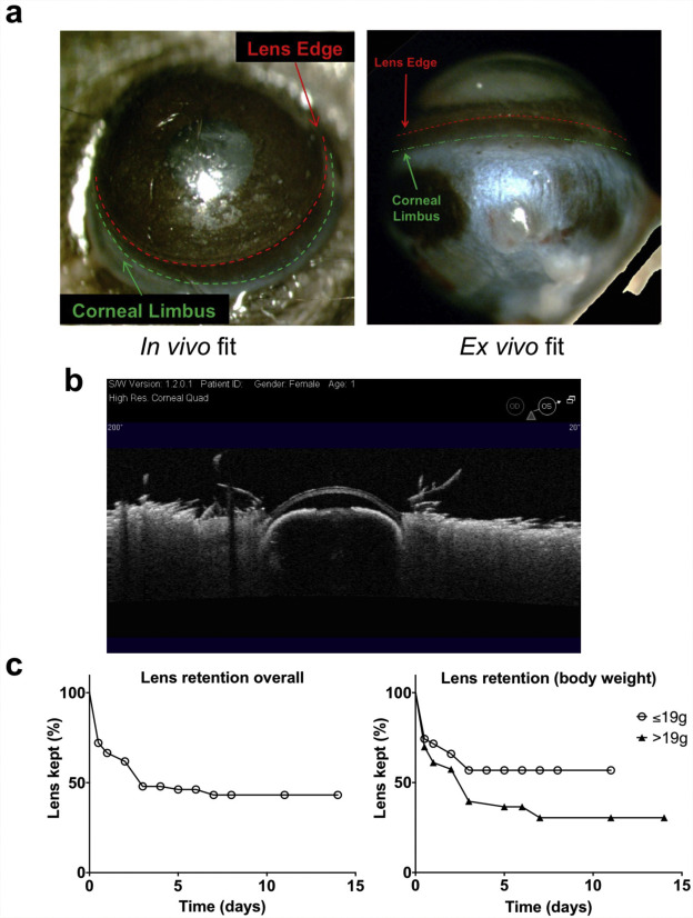 A novel murine model for contact lens wear reveals clandestine IL-1R