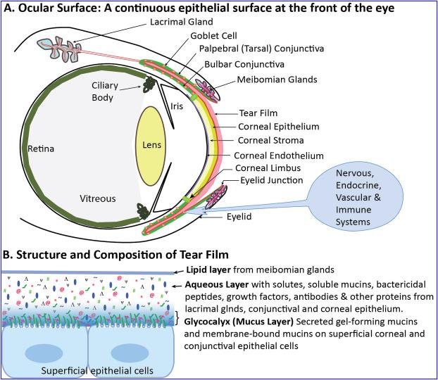 Human papillomavirus in ocular surface diseases, Human papillomavirus or HPV hpv impfung vorteile