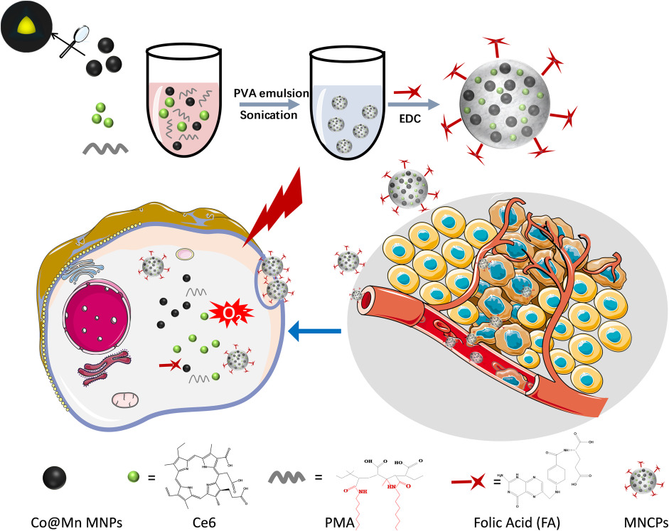 Multifunctional co-loaded magnetic nanocapsules for