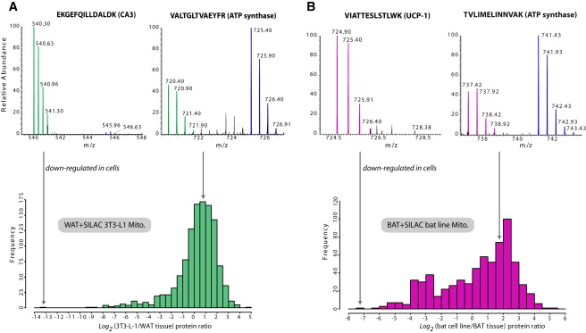Proteome Differences Between Brown And White Fat Mitochondria Reveal