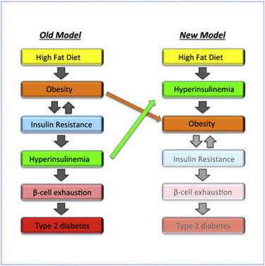 hyperinsulinemia high fat diet