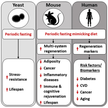 A Periodic Diet that Mimics Fasting Promotes Multi-System