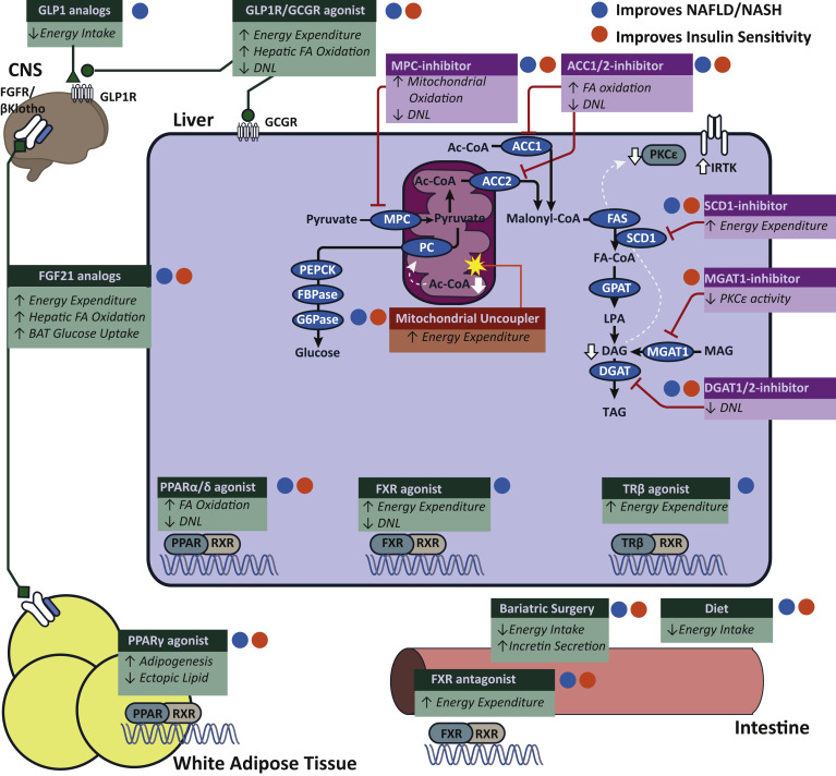 Nonalcoholic Fatty Liver Disease as a Nexus of Metabolic and Hepatic ... bfbecd422a